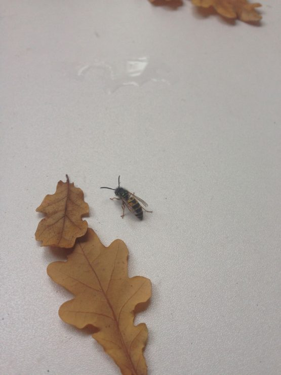 Some of the images that inspire me. The bee and the leaf.